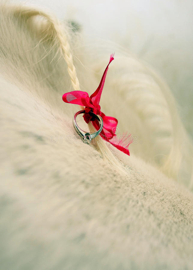 Engagment圆环被栓对马鬃毛 库存图片