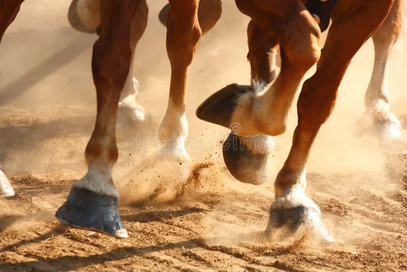 Enganches corrientes de los caballos fotos de archivo