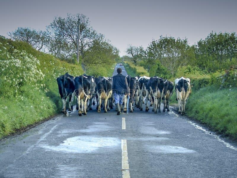 Engarrafamento irlandês foto de stock royalty free