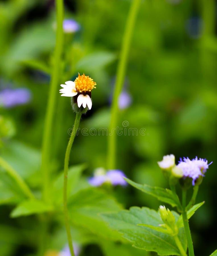 Engazonnez la fleur photo libre de droits