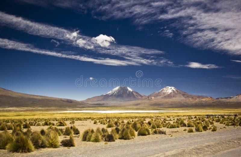 Engazonnez le dessert en Bolivie près du volcan Sajama avec les montagnes couvertes de neige photo libre de droits