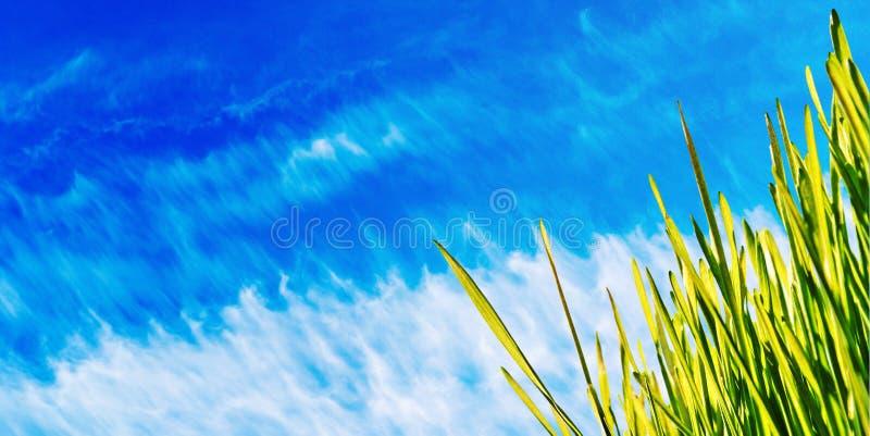 Engazonnez le drapeau de source de ciel bleu images libres de droits