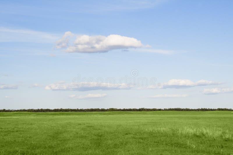 Engazonnez le pré, le ciel bleu et les nuages blancs photographie stock libre de droits