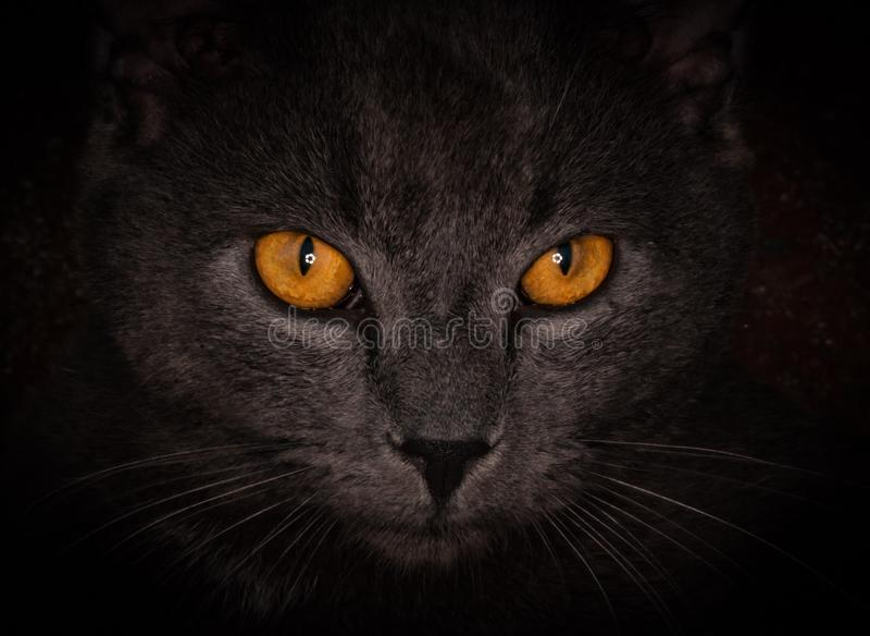 Enge Cat Eyes royalty-vrije stock fotografie