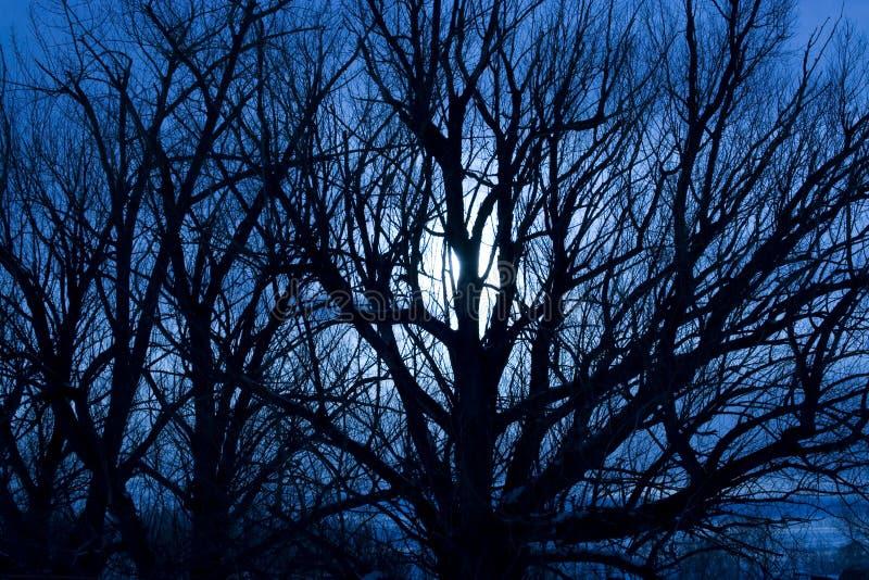 Enge Maanbeschenen Nacht stock foto