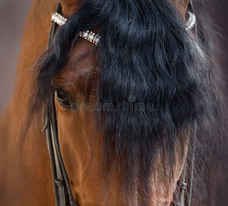 Enge Sicht auf das Auge, den Kopf und die Stirn des andalusischen Pferdes lizenzfreies stockfoto