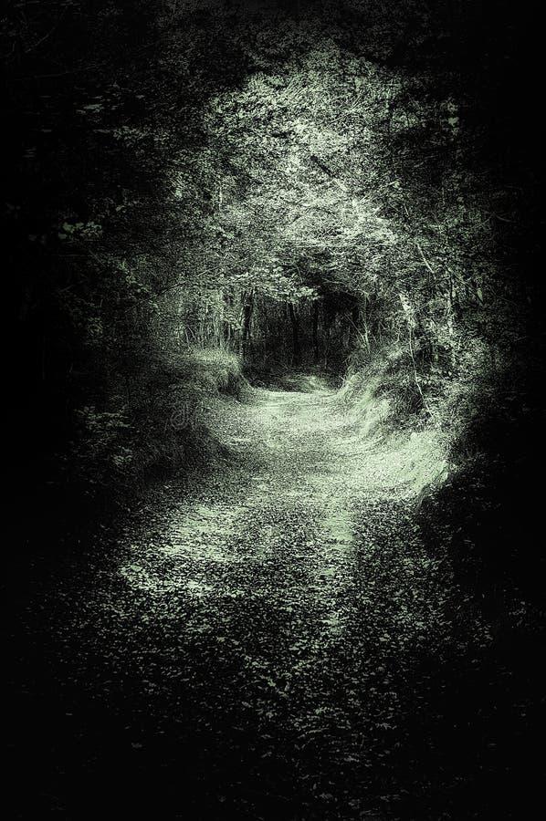 Enge weg in donker bos royalty-vrije stock afbeeldingen