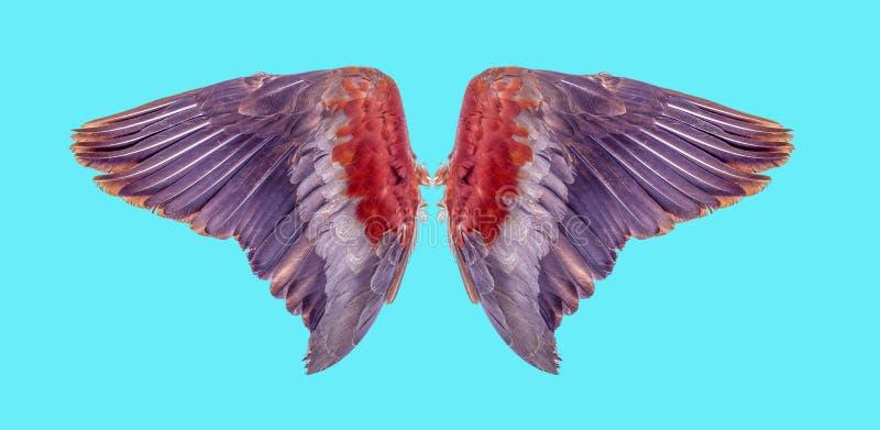 Engelenvleugels geïsoleerd op achtergrond stock foto