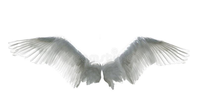 Engelenvleugels op wit worden geïsoleerd dat stock afbeelding