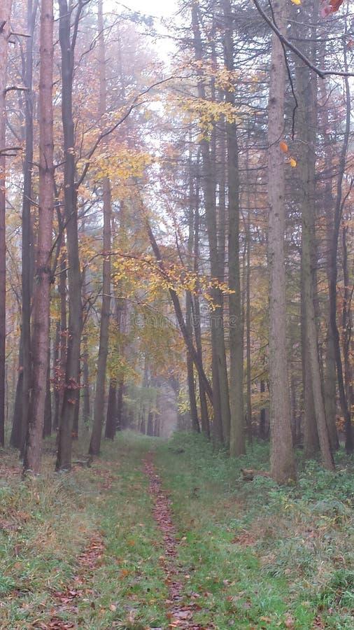 Engels bos in de mist stock fotografie