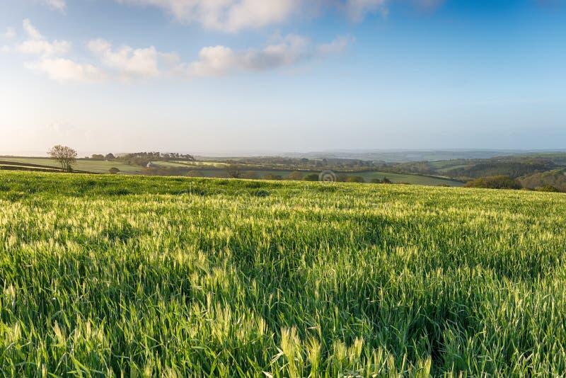 Download Engels platteland stock foto. Afbeelding bestaande uit mooi - 54089930