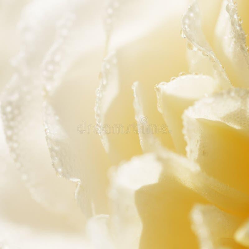Engelse de room de kleur van het Unfocusedonduidelijke beeld nam bloemblaadjes, abstracte Romaanse achtergrond toe royalty-vrije stock foto