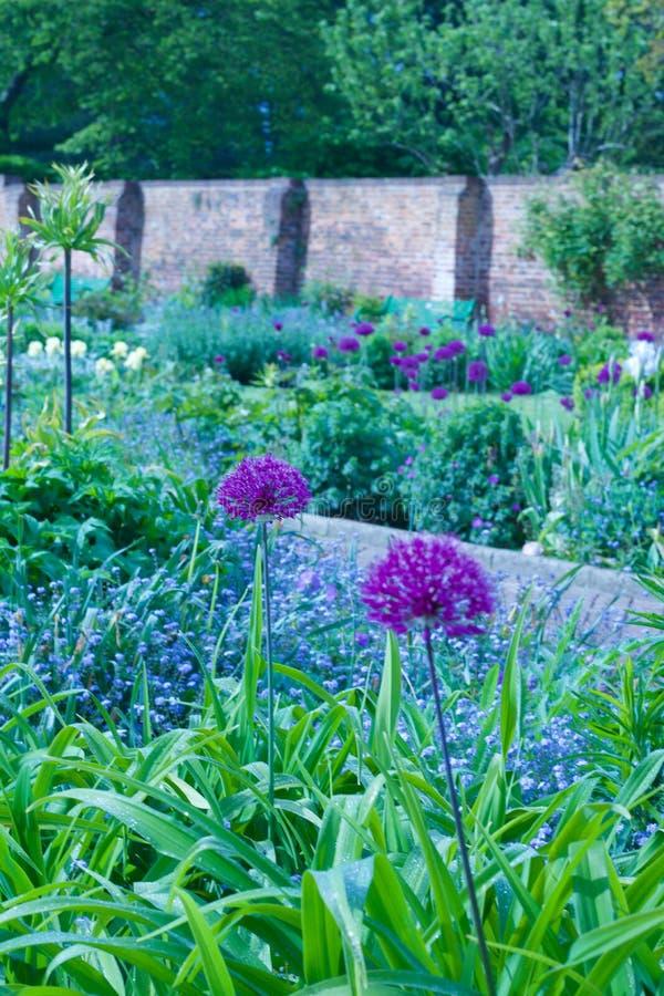 Engelse land ommuurde tuin met mooie selectie van installaties - portretbeeld royalty-vrije stock afbeelding