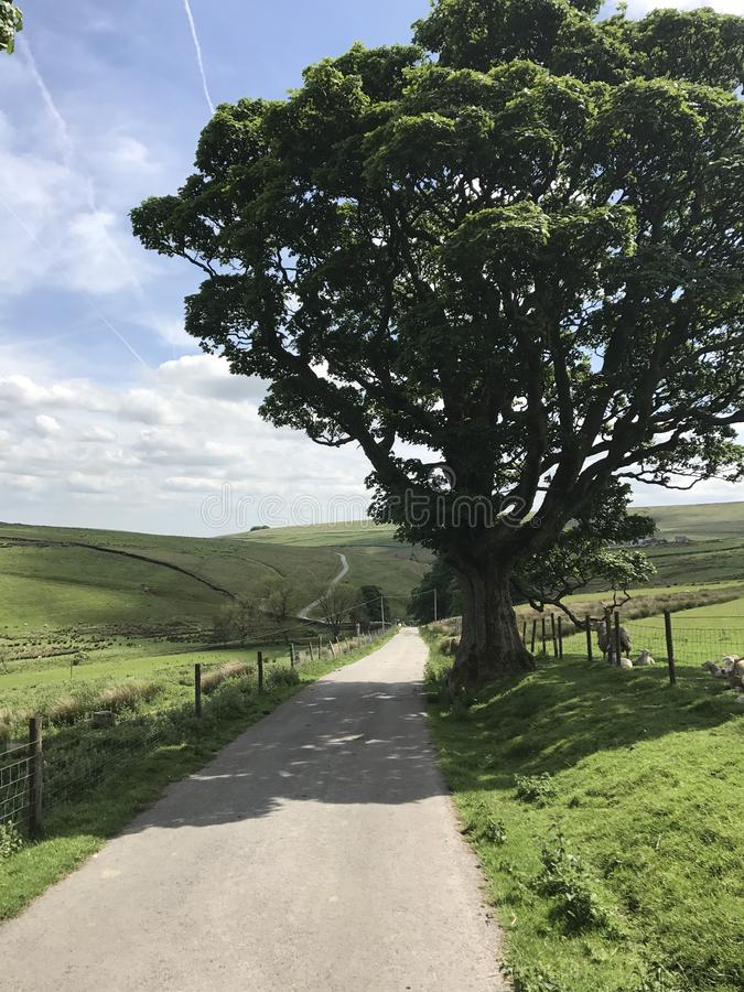 engelsk oak royaltyfri foto
