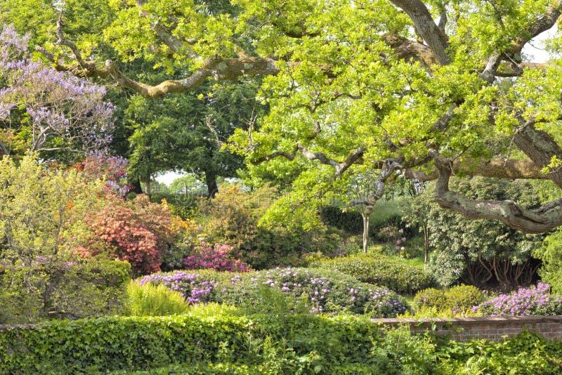 Engelsk vårträdgård med blommor, ekar fotografering för bildbyråer