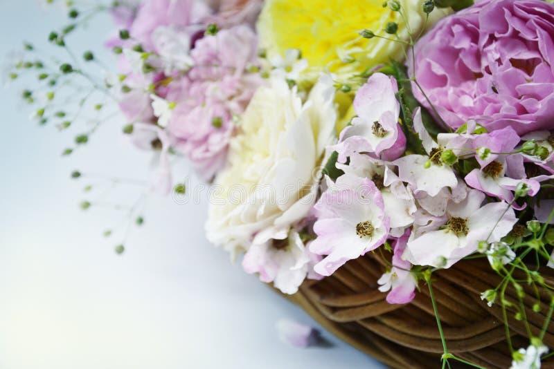 Engelska rosor i korg på neutral bakgrund arkivbild