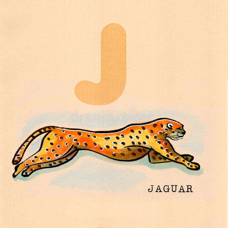 Engelskt alfabet, Jaguar royaltyfri illustrationer
