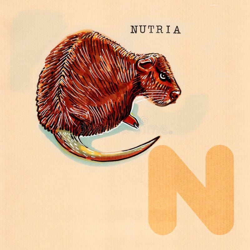 Engelskt alfabet, Nutria royaltyfri illustrationer