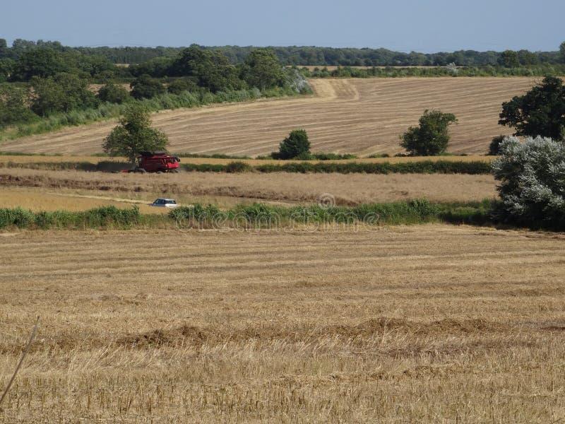 Engelskt bygdbondefält med skördar royaltyfri bild