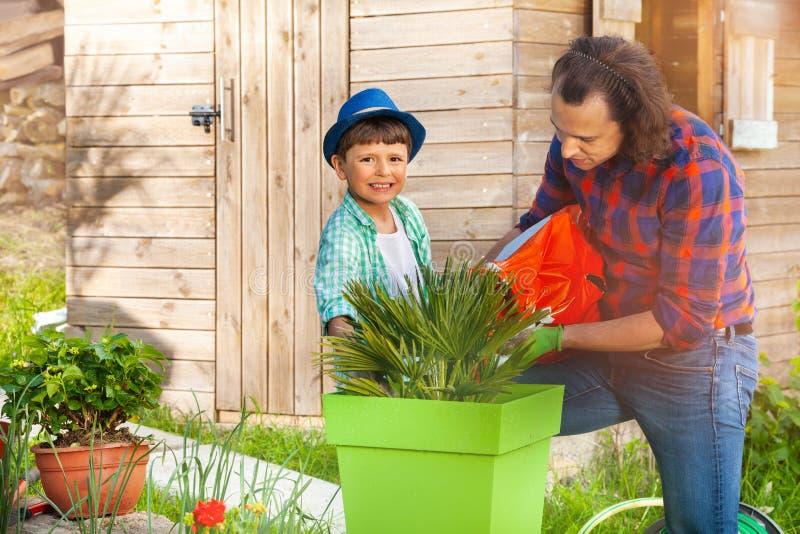 Engendrez le fils de enseignement plantant vers le haut d'un jardin de récipient photographie stock libre de droits