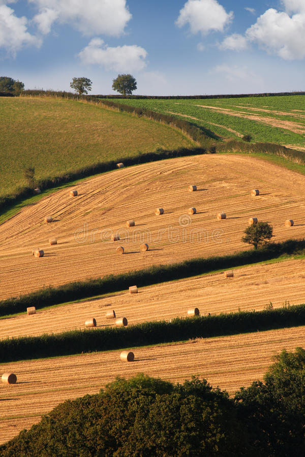 Download England, Countryside During Harvest Stock Photo - Image: 14211938