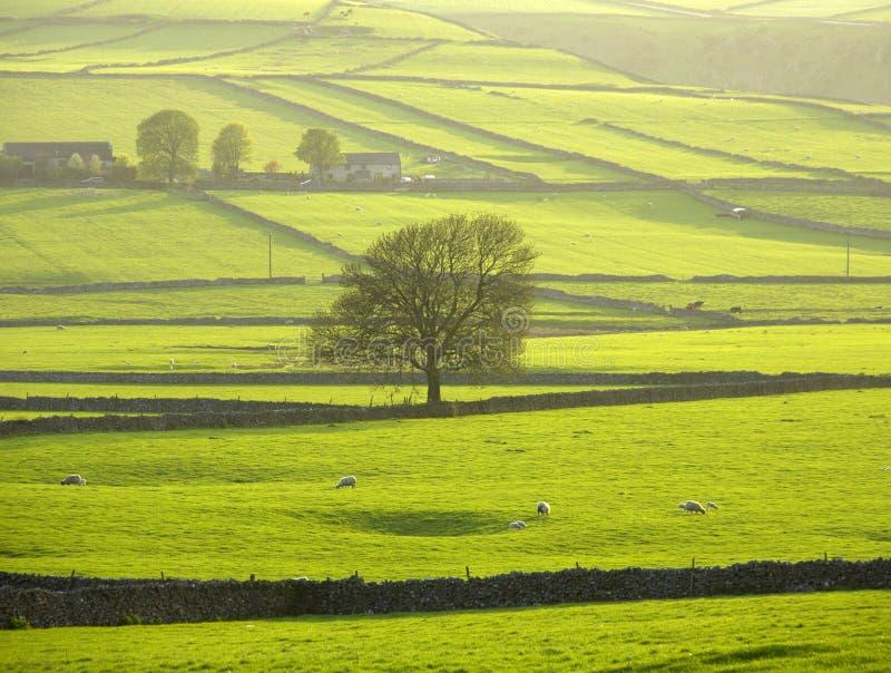 Download England Derbyshire Peak District National Park Stock Photo - Image: 1305924