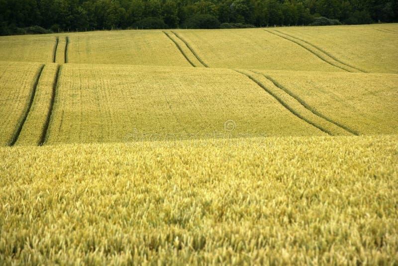 england för bedfordshirecornfieldlän yelden den home byn royaltyfria bilder