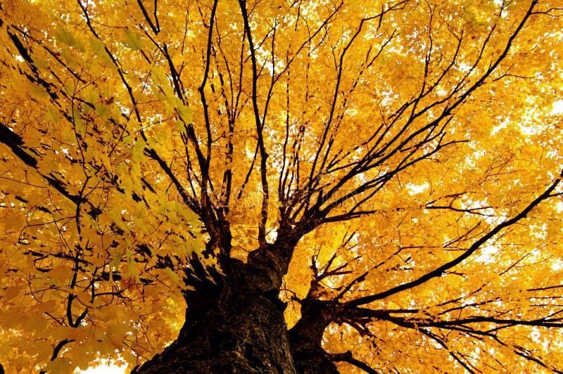 England nowego jesieni obrazy stock