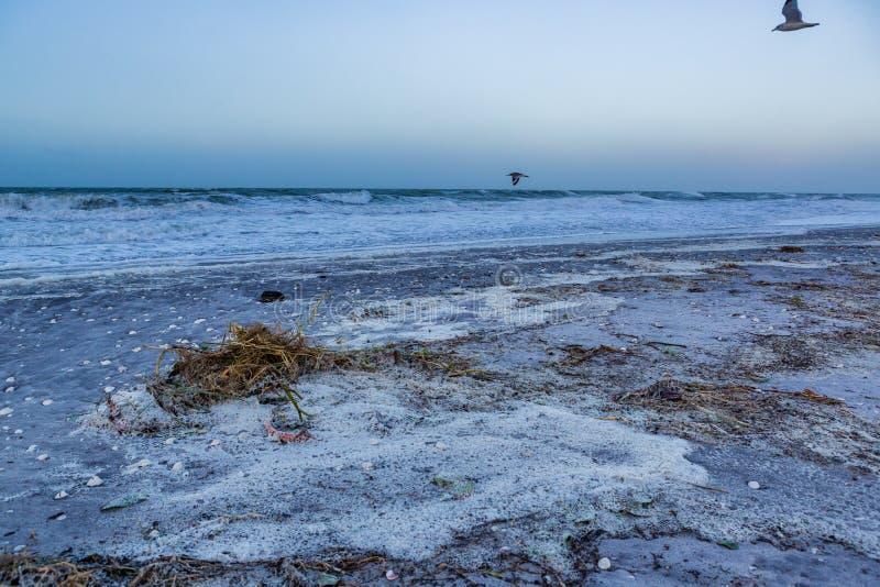 Englewood-Strand in Florida bedeckte im Rückstand, nachdem Nino Sturm verursachte stockfotos