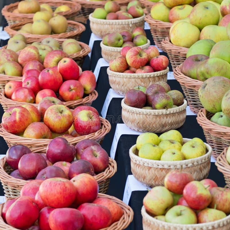 Englische Äpfel auf Zeigung im Herbst stockbild