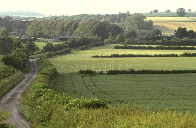 Englische Bauernhoffelder stockbild