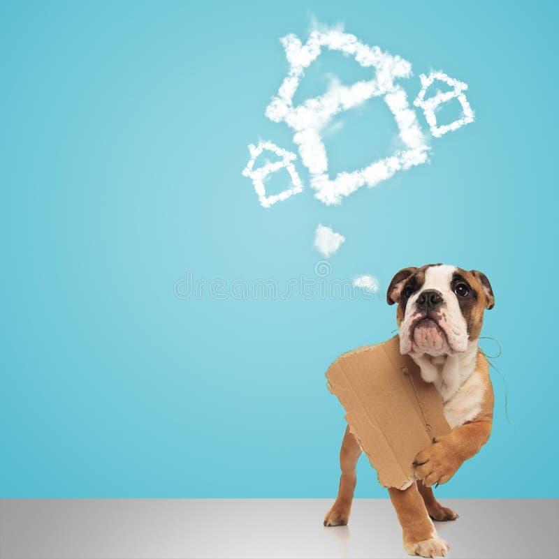 Englische Bulldogge, die Zeichen und Träume eines neuen Hauses hält lizenzfreie stockfotos