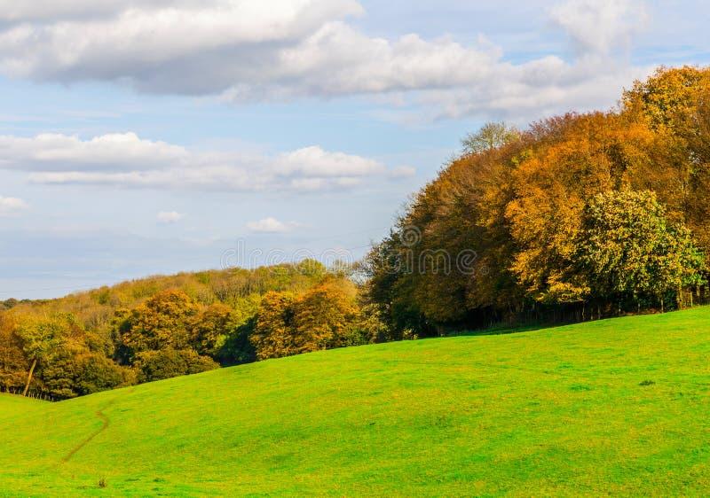 Englische grüne Wiese an einem sonnigen Tag, eine typische ländliche Landschaft O stockfotografie