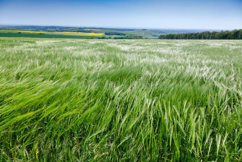 Englische ländliche Landschaft mit Gerstenfeld lizenzfreies stockfoto