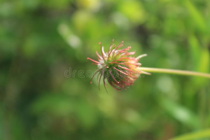 Englische Land-Gartenblumen stockfotos