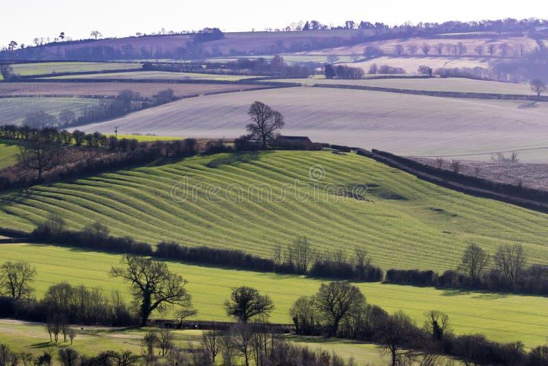 Englische Landschaft mit der niedrigen Sonne, die mittelalterliche Kante und furr zeigt lizenzfreies stockbild