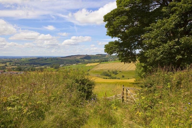 Englische Sommer-Landschaft stockbild