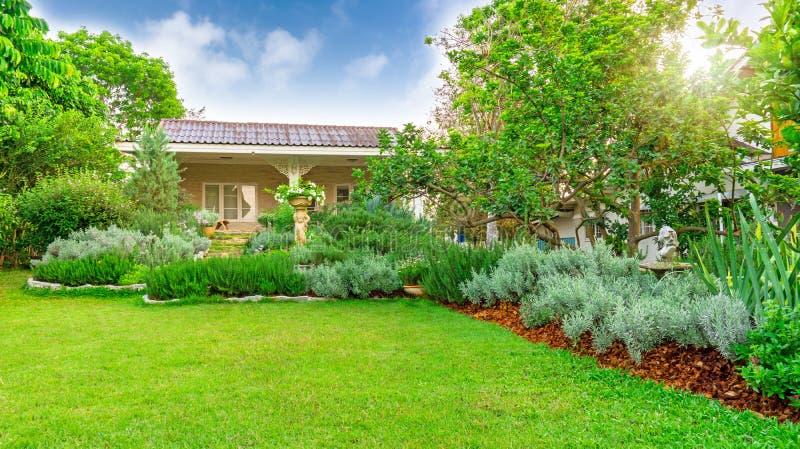Englischer Häuschengarten auf Rasenhinterhof des grünen Grases in einem Haus, infomal Landschaft mit Rosmarinkrautblattsilber v stockbilder