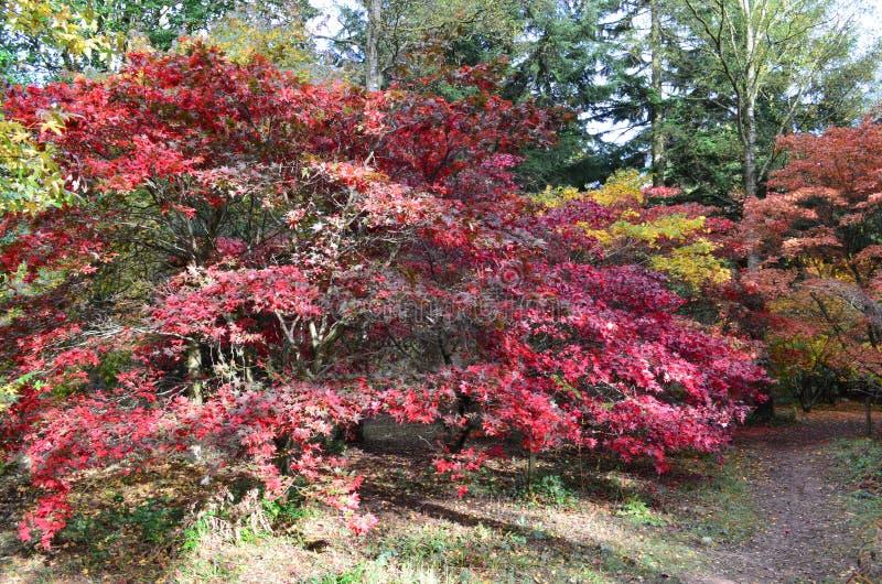 Englischer Herbst stockfotografie