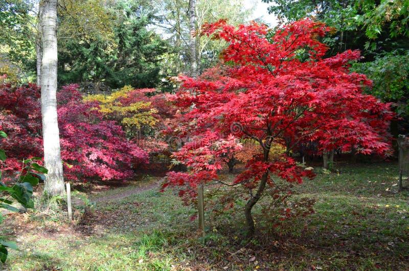 Englischer Herbst lizenzfreies stockfoto