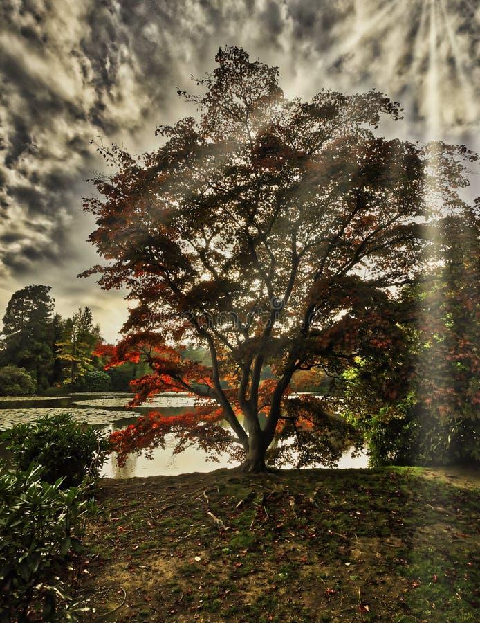 Englischer Herbst mit See, strahlt Bäume und sichtbare Sonne - Uckfield, Ost-Sussex, Vereinigtes Königreich aus lizenzfreie stockfotos