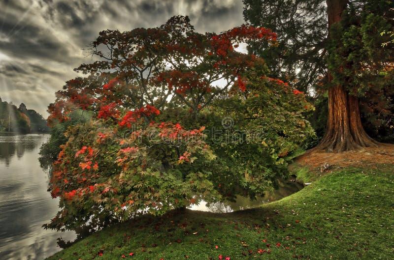 Englischer Herbst mit See, strahlt Bäume und sichtbare Sonne - Uckfield, Ost-Sussex, Vereinigtes Königreich aus lizenzfreies stockfoto