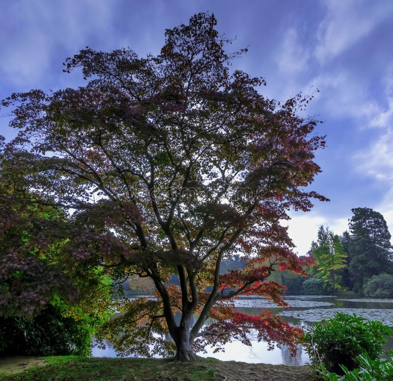 Englischer Herbst mit See und Bäumen - Uckfield, Ost-Sussex, Vereinigtes Königreich stockfoto