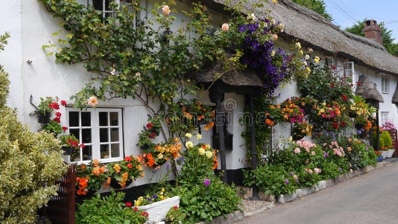 Englisches Landhäuschen gedeckt mit Blumen stockbilder
