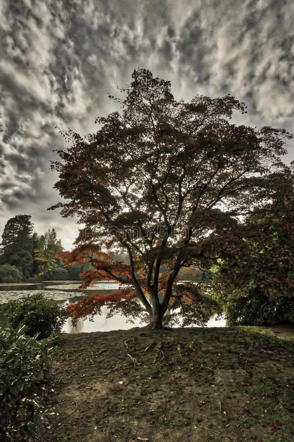 English autumn in West Sussex, United Kingdom. English autumn / West Sussex, United Kingdom royalty free stock photo