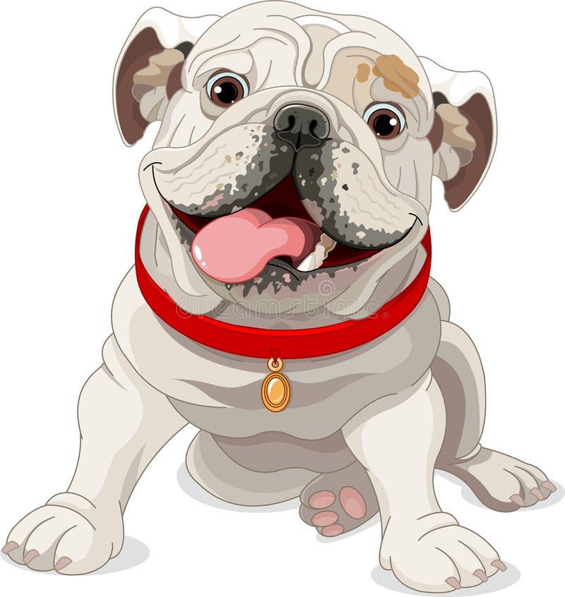 English bulldog. Illustration of English bulldog with red collar vector illustration