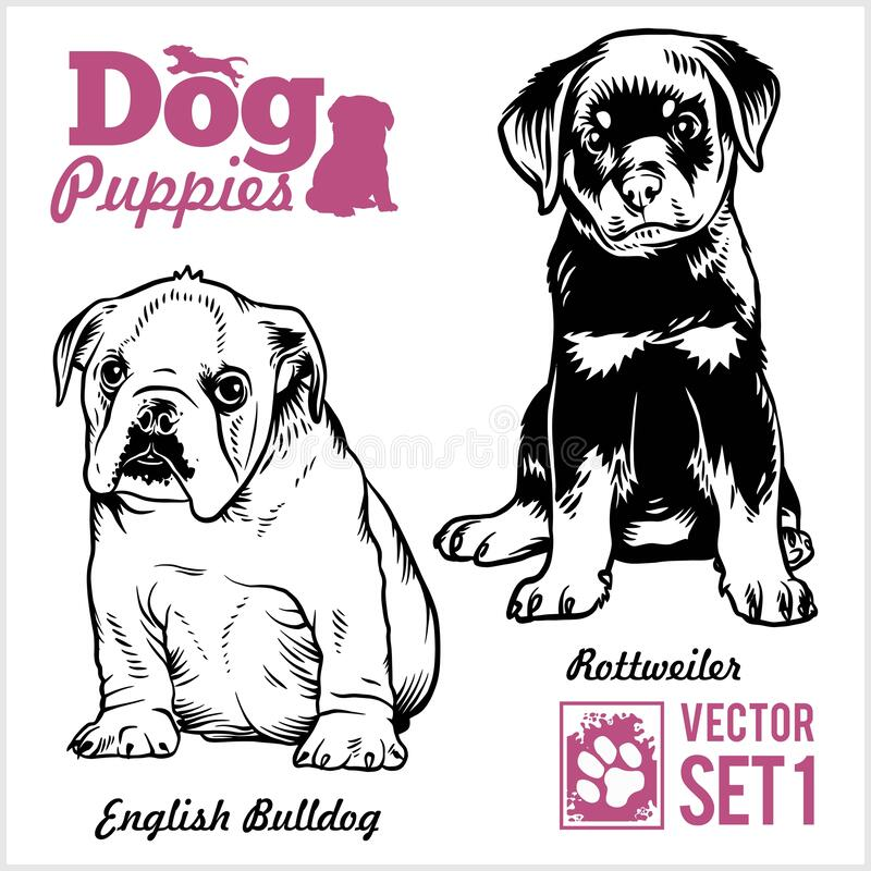 English Bulldog and Rottweiler - Dog Puppies. Vector set. Funny dogs puppy pet characters different breads doggy royalty free illustration
