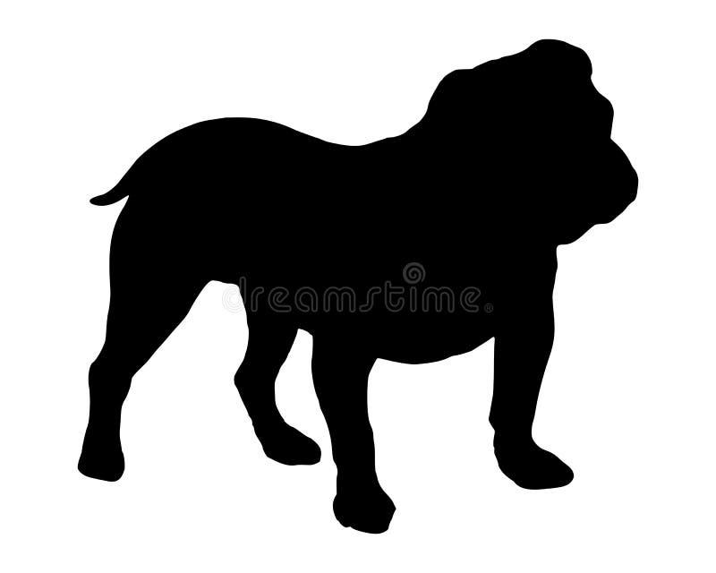 English Bulldogge