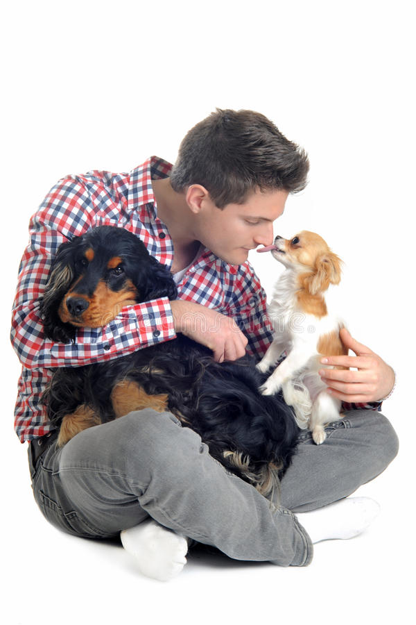 English cocker, chihuahua and man royalty free stock image
