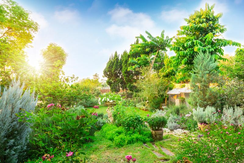 English cottage garden on green grass lawn backyard, infomal landscape decorate with roses, flower plant, rosemary herb, lavender. Greenery trees and stock photo